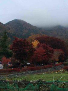第二次・富士山、忍野八海、氷穴、河口湖のもみじ回廊・27