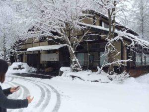 戸隠の雪・3(そばの実)