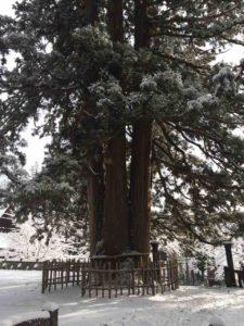 戸隠の雪・19(戸隠神社)